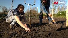 Planter, manger, partager : La forêt comestible d'Aragone